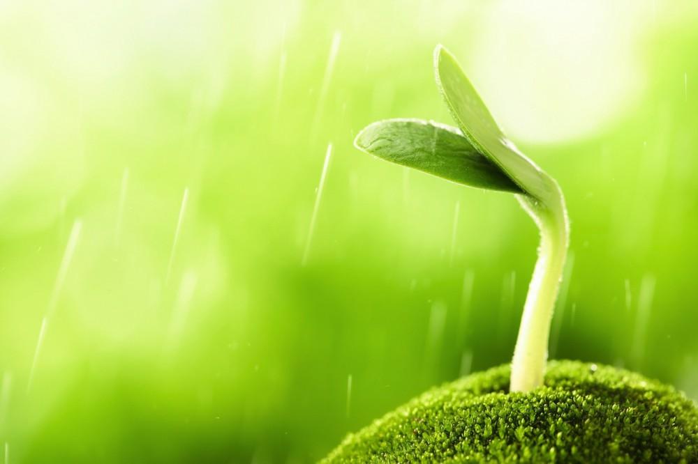 Wann leiden Pflanzen