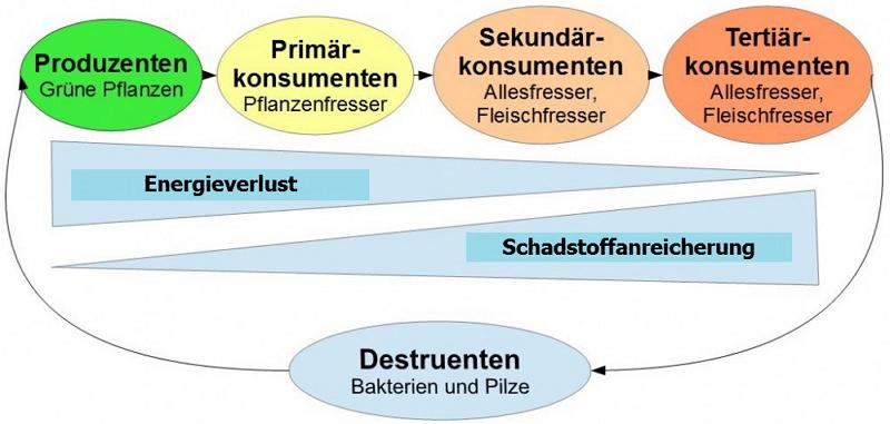 Nahrungskreislauf